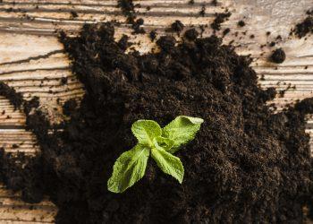 Produção de fertilizantes fosfatados na Rússia aumentou entre janeiro e novembro de 2020